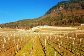 Badoux Vins ( Vaud Chablais, Suiça)